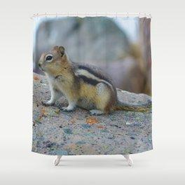 Golden mantled ground squirrel in Jasper National Park   Canada Shower Curtain