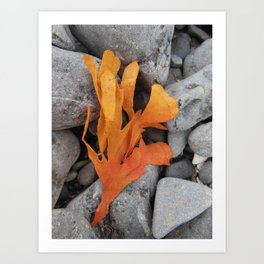 Orange  Seaweed (1) Art Print