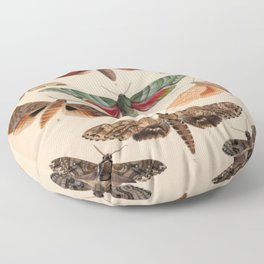 Vintage Natural History Moths Floor Pillow