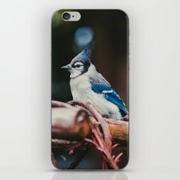 Blue Jay (Color) iPhone Skin