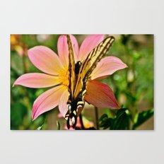Dahlia v. Butterfly Canvas Print