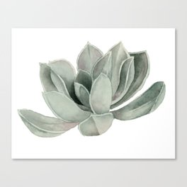 Succulent Plant Watercolor Painting Canvas Print