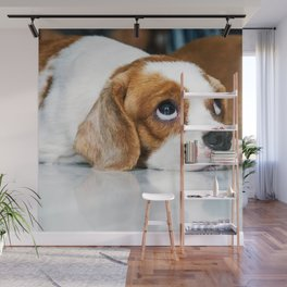 CoCo 狗狗 Wall Mural