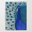 Peacock Pride by sandrashugart