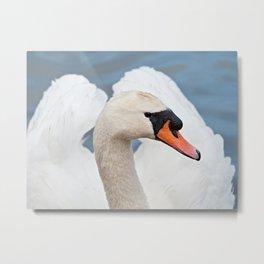 Beautiful Swan Metal Print