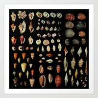 shells Art Prints featuring Shells by Good Sense
