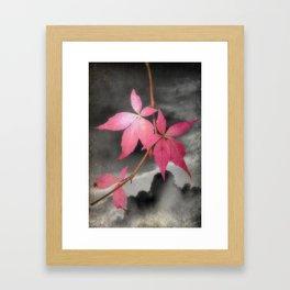 Last Of Autumn Leaves Framed Art Print
