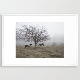 Two Horses Under a Tree in the Mist Framed Art Print