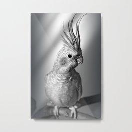 Portrait of a cockatiel black and white Metal Print