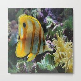 Yellow Longnose Butterfly Fish Metal Print