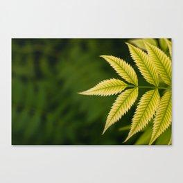 Plant Patterns - Leafy Greens Canvas Print