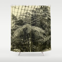 Angiopteris Tevsmanniana Shower Curtain
