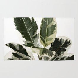 variegated rubber plant 02 Rug