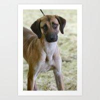 the hound Art Prints featuring Hound Pup by IowaShots