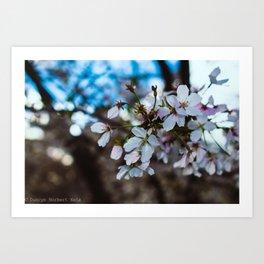 """Macro Blossom"" - DC Cherry Blossom Festival Art Print"