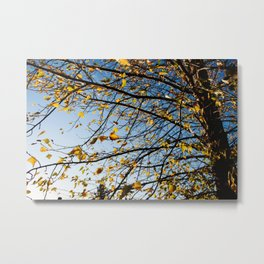 Birch Tree Photography Print Metal Print