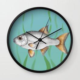 Common roach fish Wall Clock