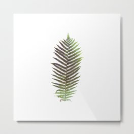 Photo fern . Ar Metal Print