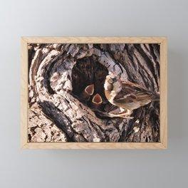 House Sparrow Keeping House Framed Mini Art Print