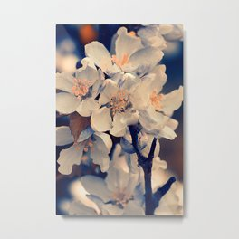 Almond bloom(3) Metal Print