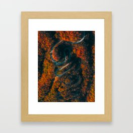 Autumn colours and curvy road in Japan Framed Art Print