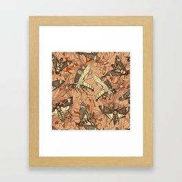 Death's-head hawkmoth rust Framed Art Print