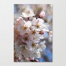 Cherry Blossom Bundle Canvas Print