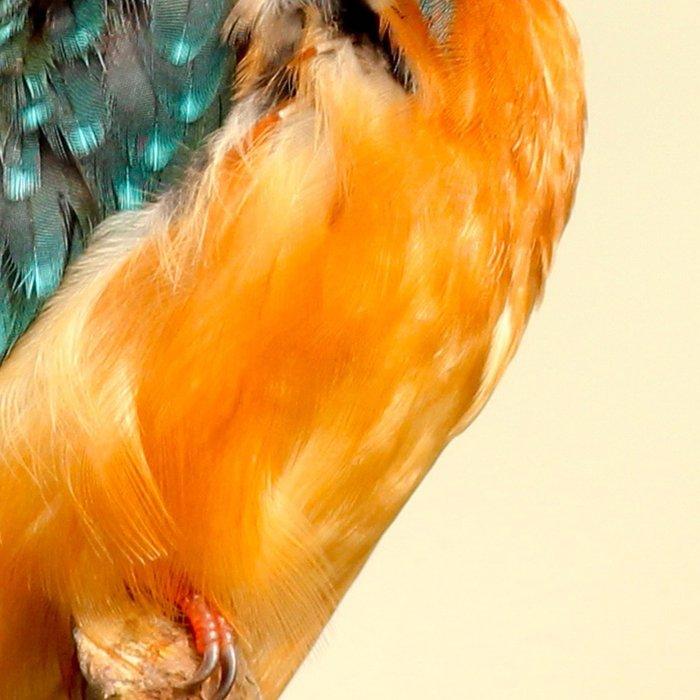 Kingfisher Bird Leggings