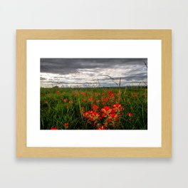 Brighten the Day - Indian Paintbrush Wildflowers in Eastern Oklahoma Framed Art Print