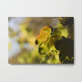 Autumn Grape Leaf Metal Print