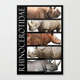 Rhinos of the World Canvas Print