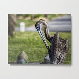 Pelican Itch Metal Print