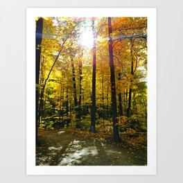 Bright Autumn Sun Art Print