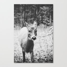 deer. Canvas Print