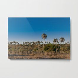 Beautiful landscape of El Palmar National Park in Argentina with yatay palm trees Metal Print