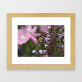 Honey Bee After Pollen Framed Art Print