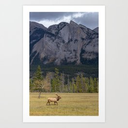 Jasper Valley Elk Art Print