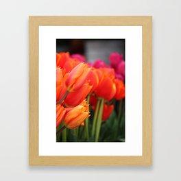 Cheery Tulips Framed Art Print