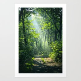 Woodland Glory Art Print