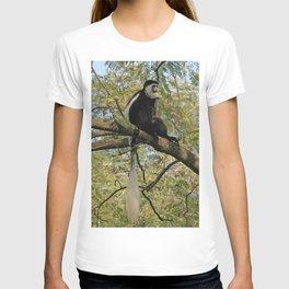 Colobus Monkey Siting on Acacia Tree, Etiopia, Africa T-shirt