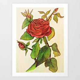 A Garden of a Single Rose Art Print