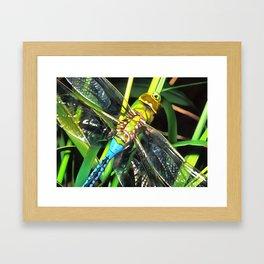 Blue Dragonfly Wings Framed Art Print
