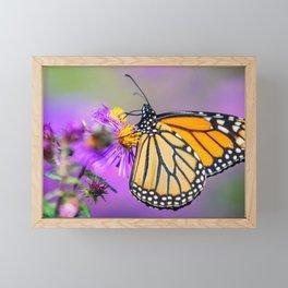 Spring Monarch butterfly on purple ester flower nature Framed Mini Art Print