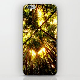 Bamboo Forest iPhone Skin
