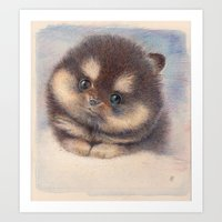 pomeranian Art Prints featuring Pomeranian by irshi