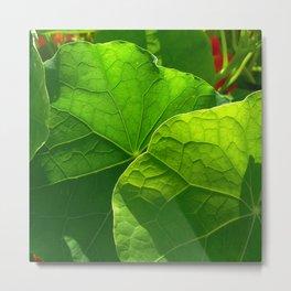 nasturtium leaf Metal Print