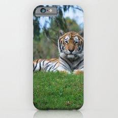 Tiger Staring Me Down - Safari Slim Case iPhone 6s