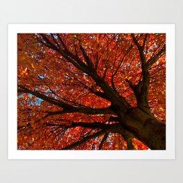 Shimmering Orange: Autumn Maple Tree Nature / Botanical Photograph Art Print