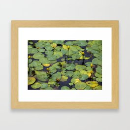 Van Dusen Lily Pads Framed Art Print