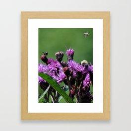 Violet Flowers Bee Photo Photograph 1  Framed Art Print